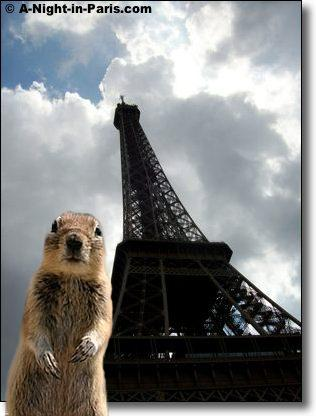 My Enjoy my List of Top Travel Tips helps everyone, even this squirrel at the Eiffel Tower in Paris :-)